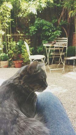 Ju in the garden Cats ~ My Pets ~ Garden
