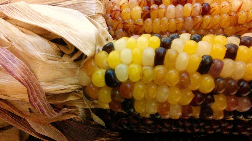 Textures And Surfaces Indian Corn. Isaw some edible Indian Corn at the Chineese Market! Taking Photos Nature's Diversities Indian Corn Indian Culture  Indian Food Autumn Colors Autumn Decoration Colour Of Life