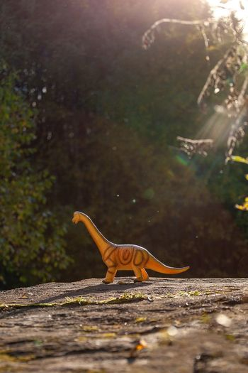 Dinosaur toy on rock in forest during sunny day
