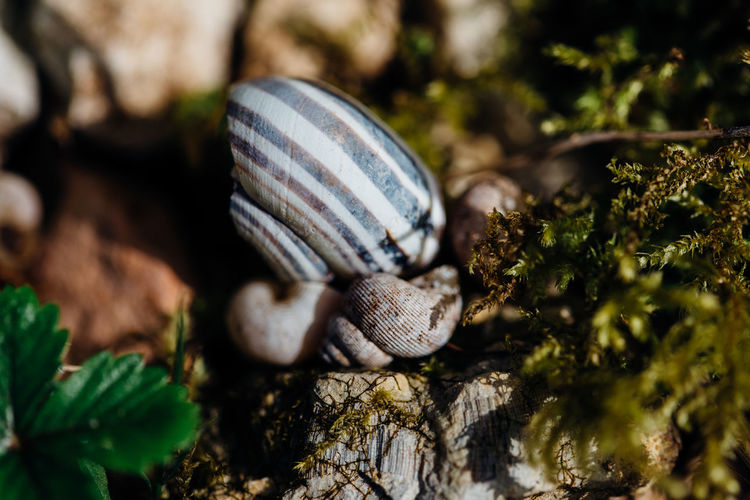 Close-up of snail on moss