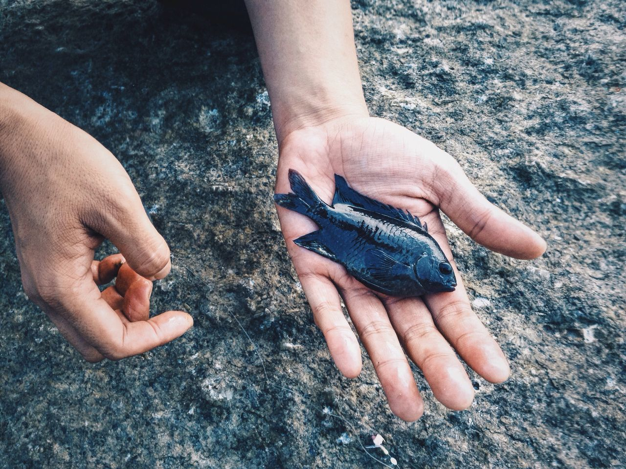 Close-up of hand holding dead fish