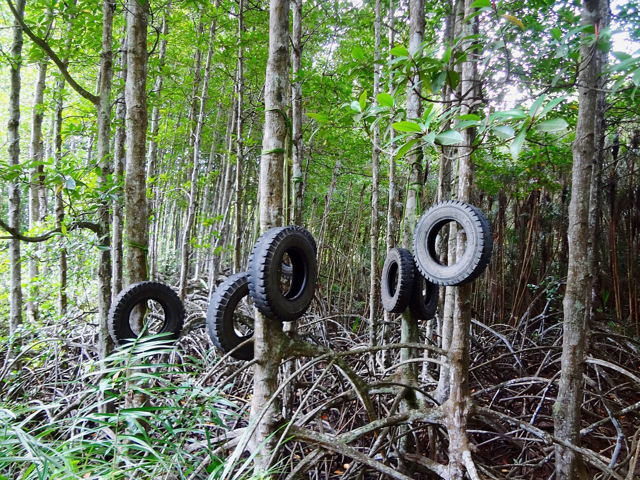 tree, tree trunk, forest, no people, day, outdoors, growth, nature, tire