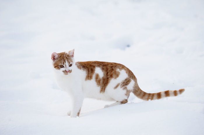 Winter tomcat Winter Animal Themes Cat Close-up Day Domestic Animals Domestic Cat Feline Mammal No People One Animal Outdoors Pets Sky Tomcat Winter Cat