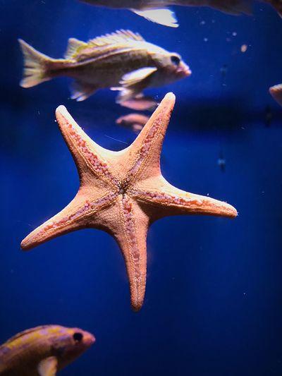 Sea Sea Life Marine Shape Animal Wildlife Starfish  Star Shape Animal Themes Fish Nature Aquarium