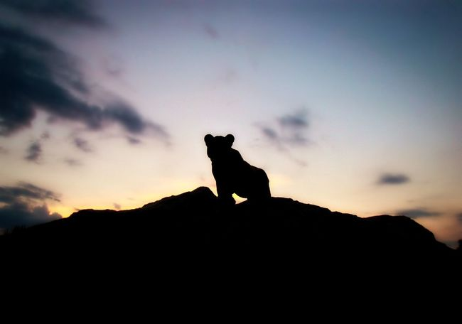 Roar Schleich Tiere Animal Cloud - Sky Figurine  Mammal Nature Orange Color Rock Rock - Object Silhouette Sky Sunset Toy Toy Photographer Toy Photography