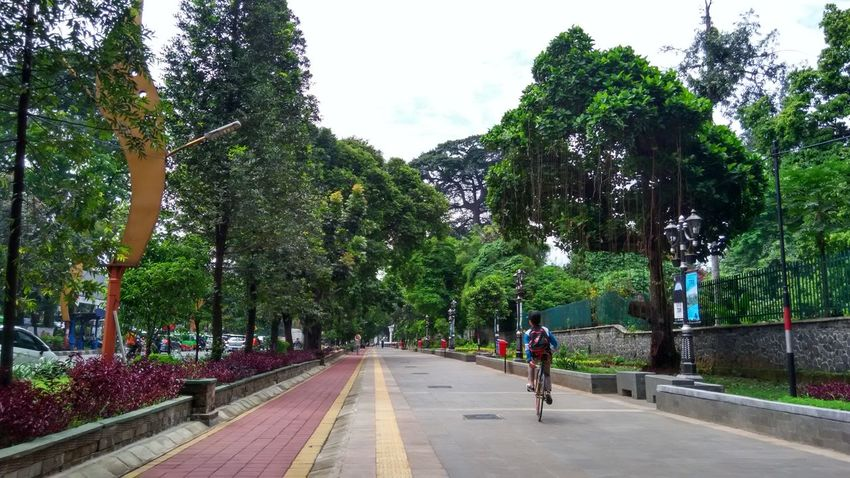 Pedestrian Outdoors Tree Day Nature Bicycle Track Bicycles Fun Cycling Botanical Gardens Bogor, Indonesia Saturday Morning Freeday Strolling Around Stroll In The Garden Strolling Through The City