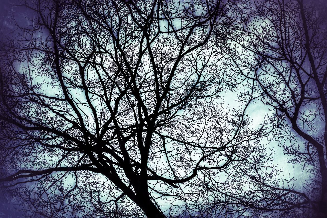 bare tree, branch, tree, nature, beauty in nature, tranquility, low angle view, outdoors, no people, day, scenics, sky