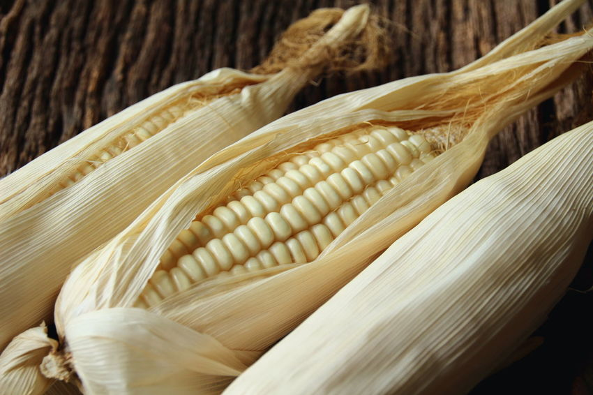 Growth Nature Plants Seeds Seeds Of Life Agriculture Photography Background Corn Corn Seeds Day Dry Corn Dry Corn Plants Nature_collection No People Propagation White Corn