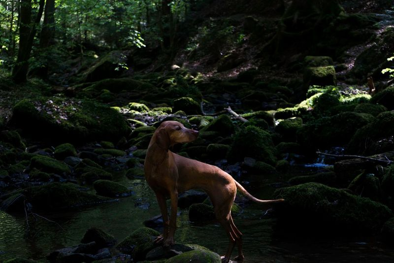View of dog on rock in forest