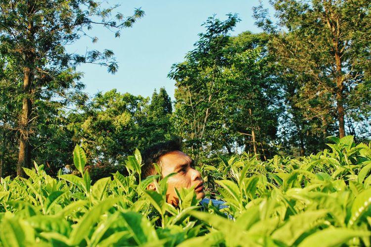 Man standing amidst tea leaves