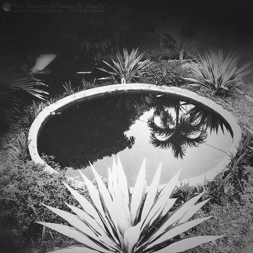 Small Park.. Eye4photography  Eyemnaturelover PhonePhotography Blackandwhite