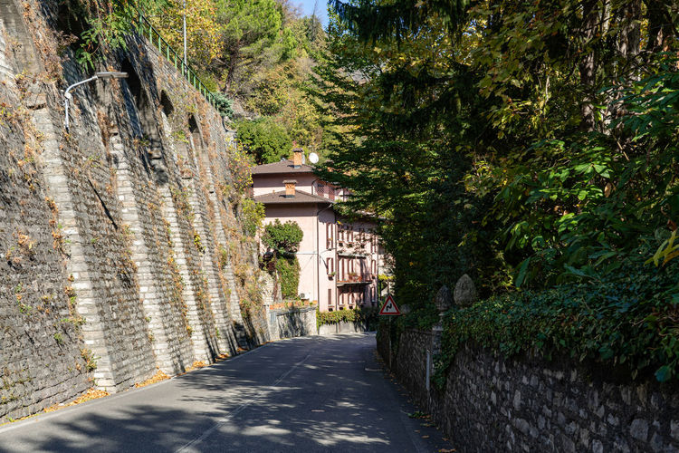 Street amidst trees and buildings in town