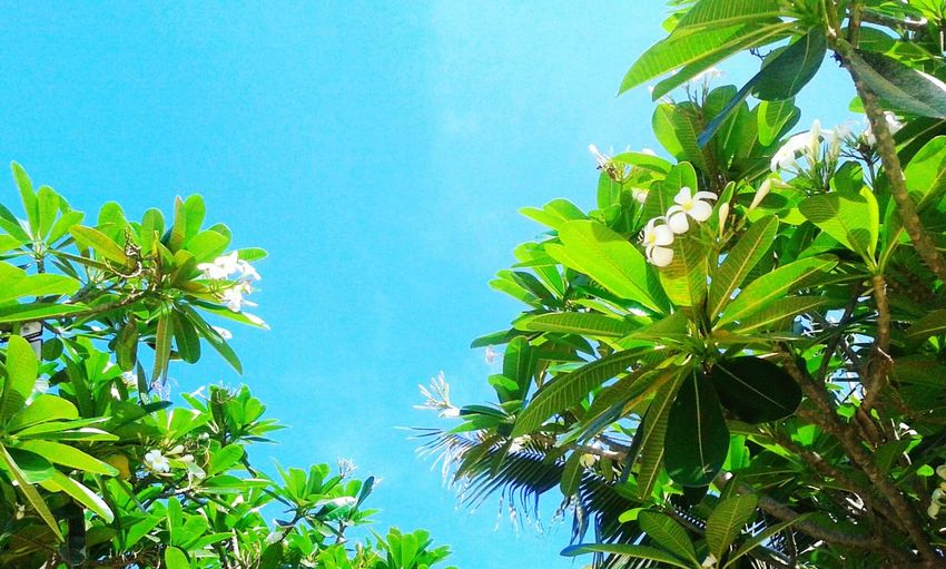 Blue sky & leaf green :)