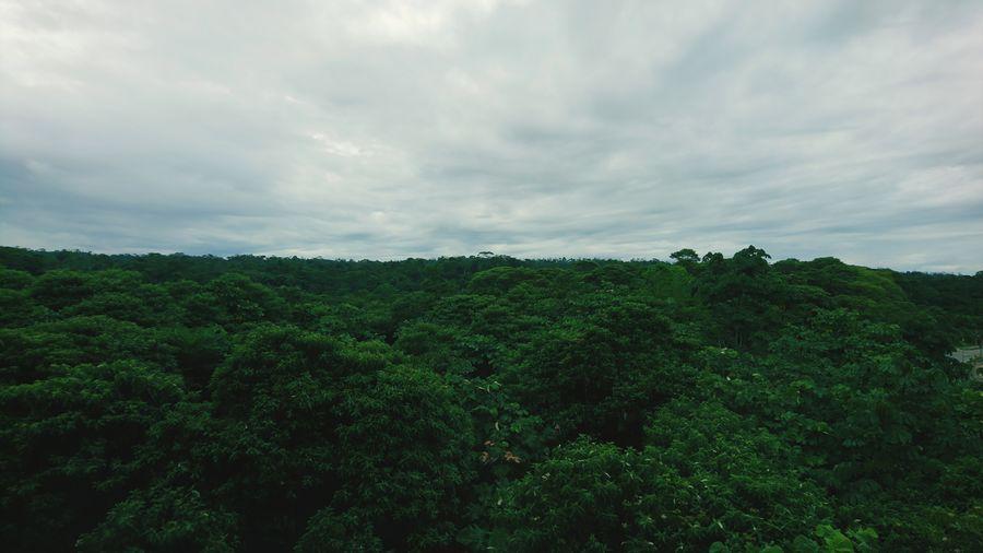 The jungle Jungle Green Color Nature Jungle Life