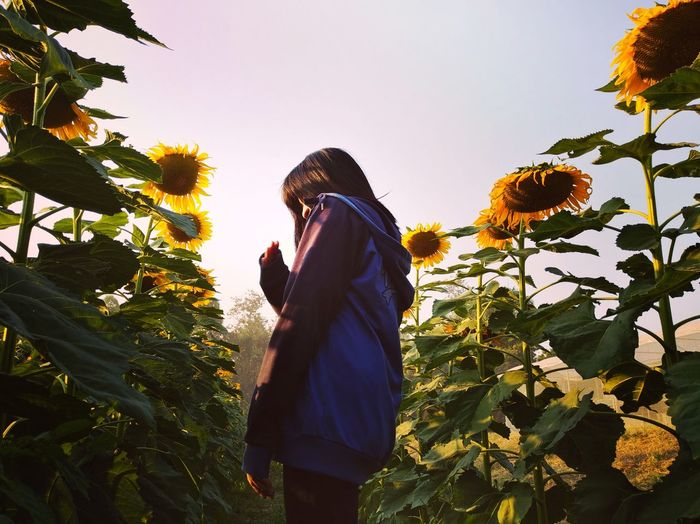 Rear view of woman standing by sunflower against sky