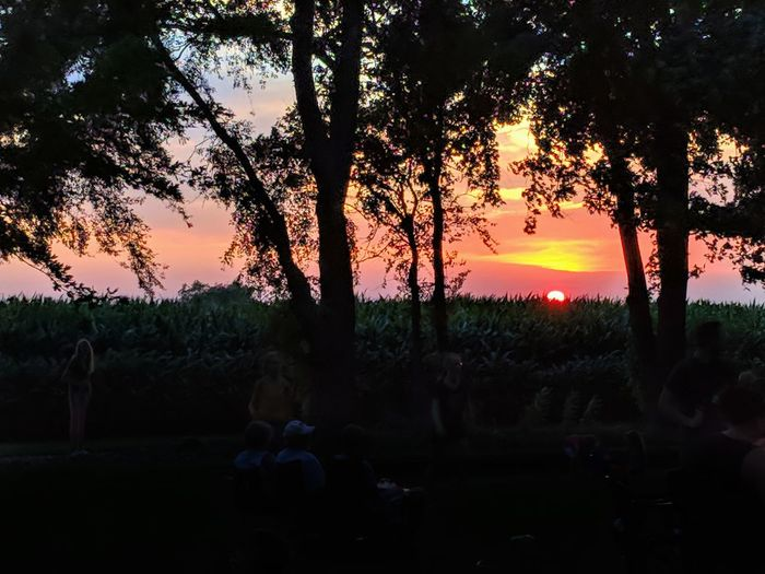Iowa sunset Corn Agriculture Tree Tree Area Sunset Forest Tree Trunk Multi Colored Silhouette Shadow Pinaceae Nature Reserve Growing
