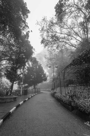 Foggy misty road indicating haunted in Penang Hill Tree Plant Direction The Way Forward Nature No People Growth Day Outdoors Footpath Penang Penang Malaysia Penang Island Road Transportation Diminishing Perspective Street Sky Tranquility City Tranquil Scene vanishing point Architecture Long