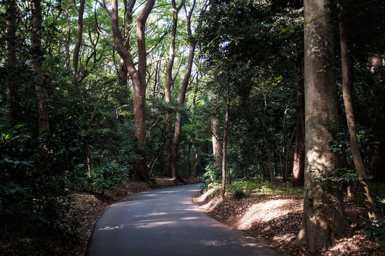 Beauty In Nature Day Forest Nature No People Path Relaxation Relaxing Road The Way Forward Tokyo Tokyo,Japan Tranquility Trees Wandering