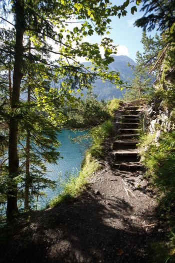 Zugspitzblick Tree Steps The Way Forward Steps And Staircases Staircase Nature Forest Day No People Outdoors Scenics Beauty In Nature Sky