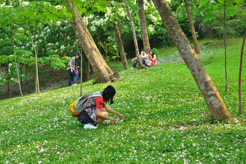 Forest landscape, quiet forest, fresh natural air. Natural Adult Beauty In Nature Branch Day Field Forest Full Length Grass Green Color Growth Leisure Activity Men Nature Outdoors Park - Man Made Space Peaceful People Playing Real People Rope Swing Togetherness Tree Tree Trunk Tung Blossom