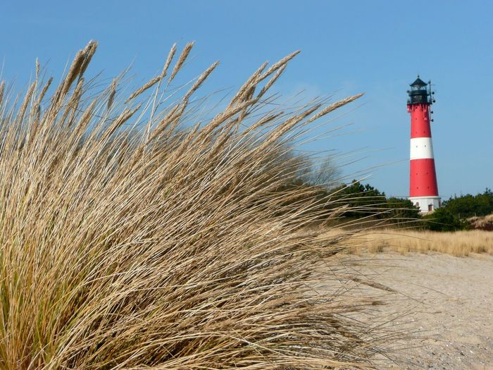 Hörnumer Leuchtturm an der Hörnumer Odde. Hoernum lighthouse on the island of Sylt. Sylt Strand Sylt_collection North Sea Coast Sylt, Germany Tranquil Scene Beauty In Nature Lighthouse Lighthouse_captures Hörnum Hörnum, Sylt-Westerland, Kantum, List Auf Sylt Hörnum-Odde Leuchtturm Relaxing Moments Tranquility Architecture Tower Built Structure Sylt Strandhafer Relaxing Protection Westerland Nature Guidance North Sea
