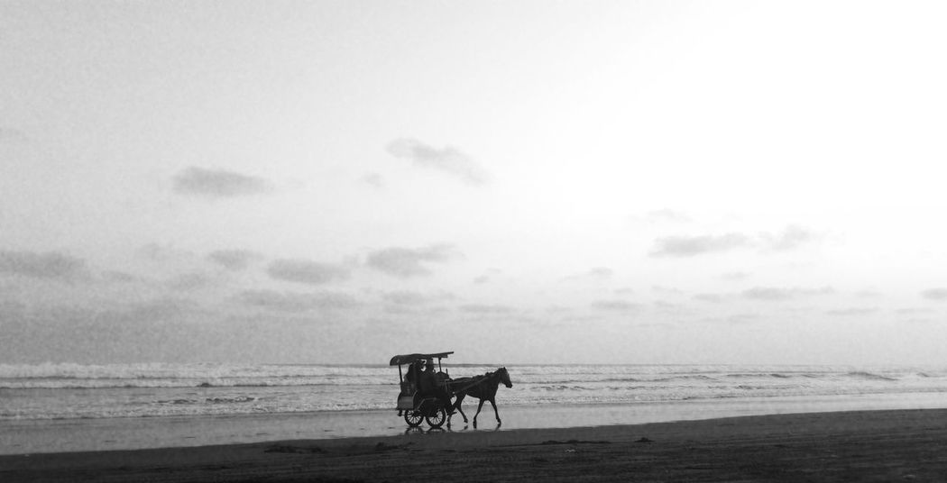 Horse and carriage ..on the Southbeach Lonetraveller