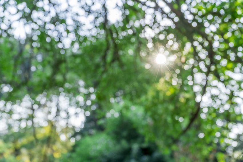 Blurred Blurry Foliage Green Neat No Focus Scenery Sun Sunstar Sun Ray Ray Of Hope