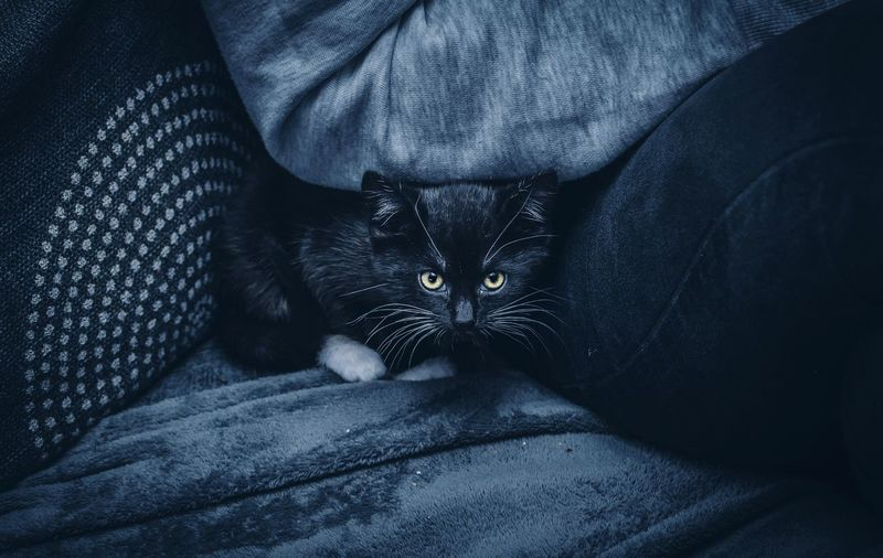 Daughters new kitten Nikon Nikonphotography Moody EyeEmBestEdits EyeEmNewHere EyeEm Masterclass Pets Domestic Domestic Animals Animal Themes Animal Cat Mammal One Animal Feline Domestic Cat Vertebrate Relaxation Furniture Indoors  Resting Bed Textile Close-up Portrait Lying Down My Best Photo