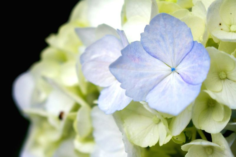 Flower Petal Beauty In Nature Flower Head Fragility Close-up Growth Freshness Nature No People Plant Blooming Day Outdoors Petunia Architecture OpenEdit EyeEm Best Shots Saitama