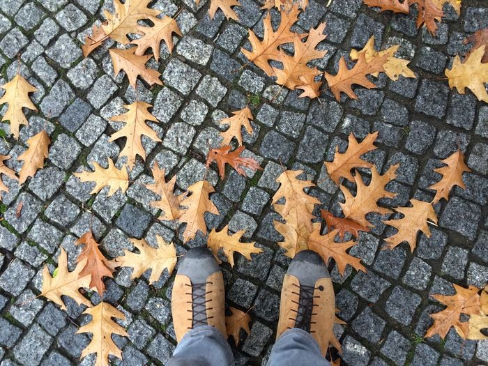 Low section of man standing in autumn leaves