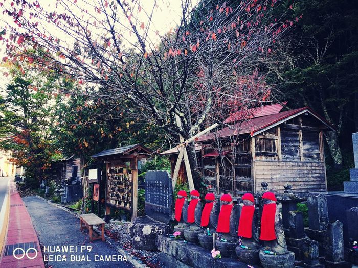 Tree Outdoors No People Architecture Fukusima,japan 桧枝岐村