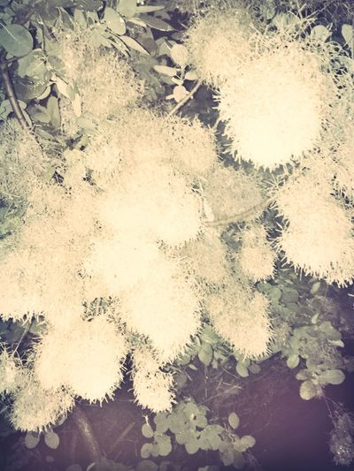 Under the Flowers Flora Hanging Flowers Floral Tree Tree Trees Floral Flowers Look Up White Flower White Flowers Flowers At Night Nature Nature And Beauty Rhode Island Rhode Island Photography⚓ Nature Photography Nature Is Art