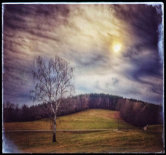 Cut And Paste Bare Tree Landscape Tranquility Tranquil Scene Tree Sky Nature Beauty In Nature Field Scenics Lone Cloud - Sky No People Outdoors Grass Day Art ArtWork Arts Culture And Entertainment Art Is Everywhere Art, Drawing, Creativity Artistic Beautiful Artistic Photo
