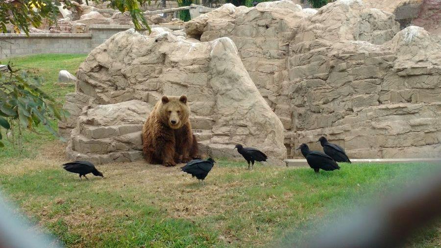 El Oso Bears El Buitre Hungry Oso  El Oso Hambre Muerte Proxima XD
