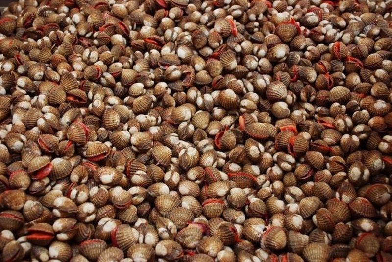 Singapore Cockles