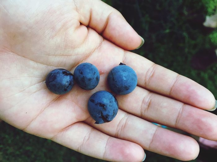 Close-up of woman holding blueberries