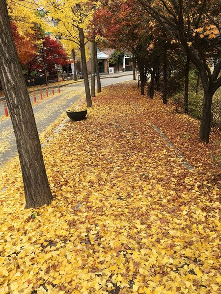 After summer, before winter Fall Road Leafs Ansan