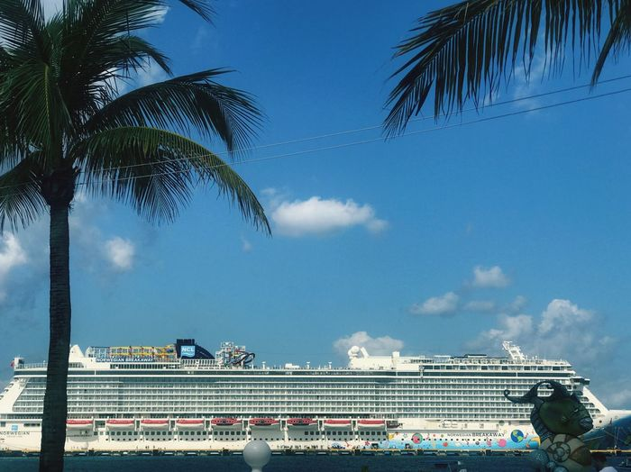 Cruise ship. Sunlight Sea Nautical Vessel Ship Large Side View Focus On Foreground Docked Moored Cruise Ship No People Blue Sky Moored Cruise Ship Leaves Tree Trunk Growth Tree Sky Palm Tree Cloud - Sky Architecture Built Structure Plant Nature Tropical Climate Day Outdoors Low Angle View Water