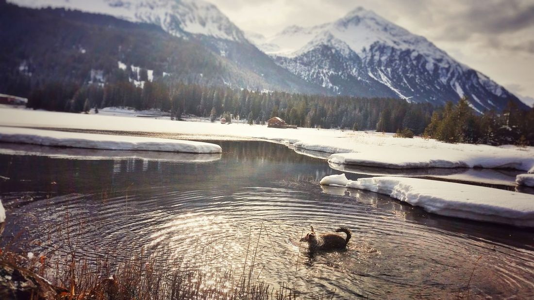 Mountain Winter_collection Naturelovers Taking Photos Switzerland Enjoying Life Mountain_collection Winter Wonderland Wintertime Eye4photography  Waterreflections  Naturlover Sony A6000 Dog DogLove Lake Heidsee Lenzerheide The Great Outdoors - 2016 EyeEm Awards