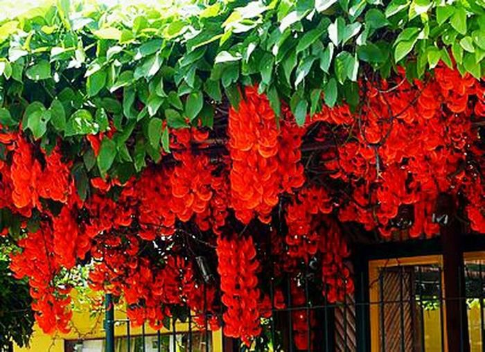 Flower ❣