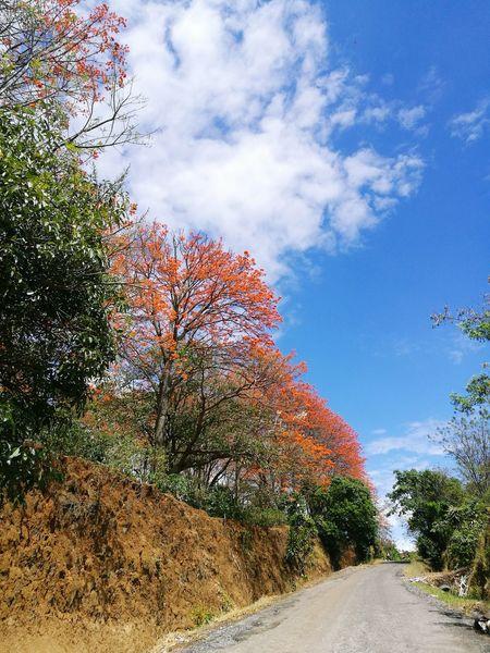 Caminos de Heredia Tree Costa Rica Y Su Naturaleza No People Colors Caminosdelmundo Centroamerica Temporada Blue Sky And Clouds Sunny The Great Outdoors - 2017 EyeEm Awards