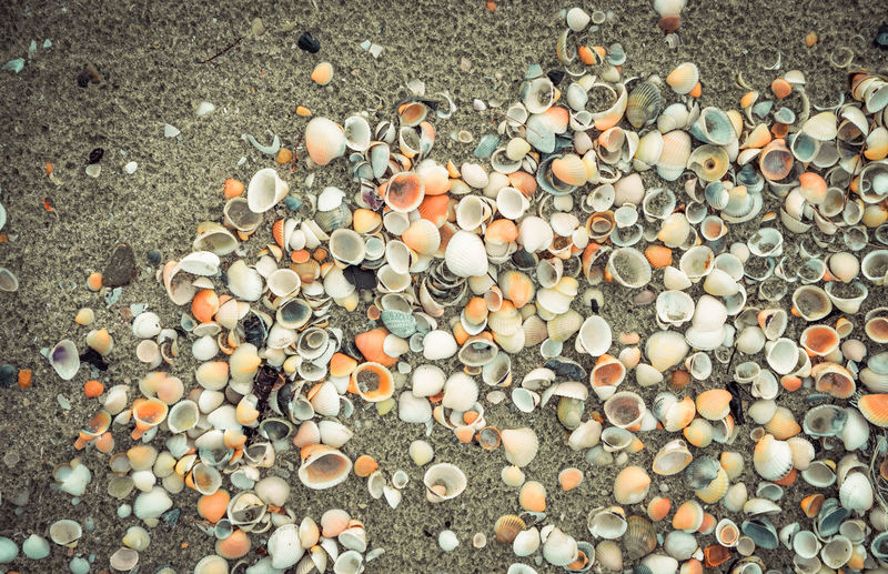 Seashells on sand beach background / Scallop clam Abstract Aquatic Backdrop Background Beach Beautiful Beauty Border Brown Clam Coastline Collection Color Conch Dead Design Frame Holiday Life Light Marine Mollusk Natural Nature Ocean Oyster  Pattern Sand Sea Seashell Seashells Seashore Shell Shells Shore Small Space Starfish  Stone Summer Sun Sunlight Texture Tourism Tranquil Tropical Vacation Variety Water White