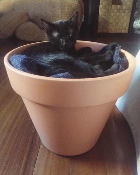 Pets Animal Themes Domestic Cat Domestic Animals One Animal Babycat Babyplants Cat BLackCat Blackbaby