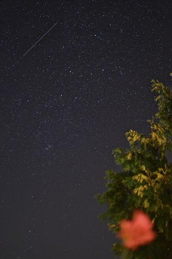 Perseus Comet Cometshower Night Nightphotography Stars Starsky Shooting Stars Under The Stars Counting Stars