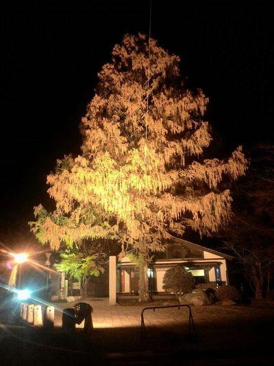 Saitama , Japan Momiji Light Up Taking Photos Relaxing Nagatoro