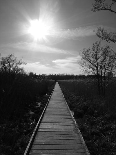 Afternoon walk in the nature reserve. Nature Walking Blackandwhite Nature Reserve