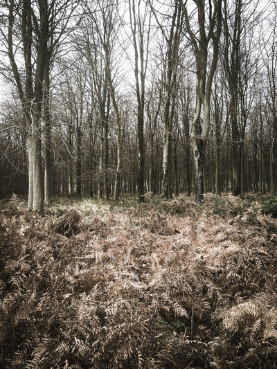 Winter woodland landscape Beauty In Nature Bracken Brown Day Forest Growth Landscape Nature No People Outdoors Peace Peaceful Quiet Scenics Tranquil Scene Tranquility Tree Tree Trunk Trees Winter Wood WoodLand