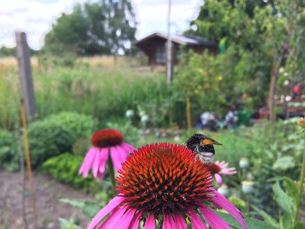 Hello Bumblebee