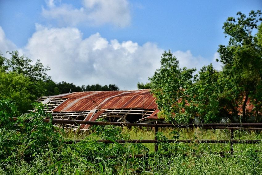 Old barn I came across running the roads Tree Day Cloud - Sky No People Nature Outdoors Growth Sky Roof Grass Architecture South Louisiana Field Oak Tree Grass Built Structure Tin Roof Rusty Metal Rustic Style Deterioration Neglected Architecture Abandoned & Derelict Abandoned Buildings Barn Barnlove