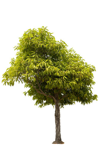 Low angle view of tree against white background